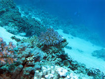 Bottom of tropical sea with coral reef on great depth Royalty Free Stock Photo