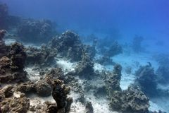 Bottom of tropical sea with coral reef on large depth on blue water background Stock Photos
