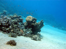 Bottom of tropical sea with coral reef, underwater Stock Photography