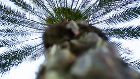 Bottom-up view of a beautiful palm tree with blue sky. Stock. Bottom view of palm tree.  stock video