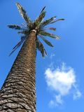 Bottom-up view of a beautiful palm tree Royalty Free Stock Photo