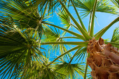 Bottom-up view of a beautiful palm Stock Photos