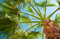Bottom-up view of a beautiful palm tree Stock Images