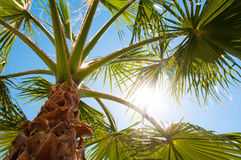 Bottom-up view of a beautiful palm tree Royalty Free Stock Images