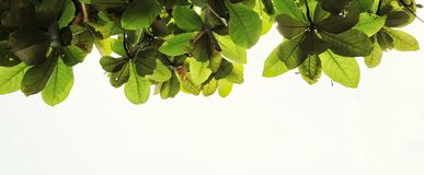 Bottom up view of green leaf Royalty Free Stock Image