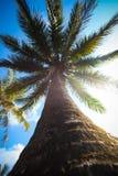 Bottom-upansicht einer Palme und des Himmels Stockbild