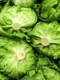 The bottom veiw of Iceberg Lettuce Stock Image