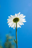 Blooming flower bottom view. Bottom view of flower with blue sky Stock Photo