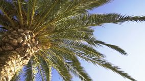 Bottom view of green exotic palm tree against blue sky with sun background. Bottom view of green exotic palm tree branches and leaves against blue sky with sun stock footage