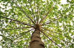 Bottom View of Green Leaved Tree during Daytime Stock Image