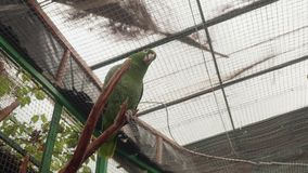 Bottom view of green parrot in cage of zoo stock footage