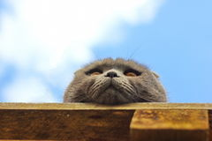 Bottom view at the muzzle of a cat Royalty Free Stock Photography