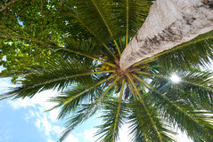 Bottom view of the palm Royalty Free Stock Images