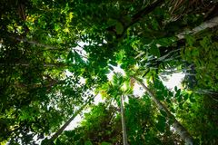 Bottom view palm tree in jungle and branches.forest and environment concept. Adventurebackgroundbeautifulbigblurredbottombranchbrightenvironmentexotic royalty free stock photography