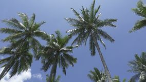 Bottom view on palm trees against the background of the blue sky in sunny day in the tropical resort stock video