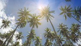 The bottom view on palm trees against the background of blue solar the sky with moving white clouds.  stock footage
