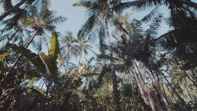 Bottom view of palm trees over summer sky. Bottom view of beautiful tropical palm trees over sunny summer sky background stock video footage