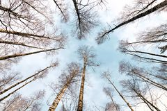 Bottom view of the sky in the forest stock photos