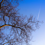Bottom view on a tree branches on blue sky Stock Photo