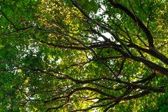 Bottom view of  tree in jungle and lighting of morning.forest and environment concept. Adventurebackgroundbeautifulbigblurredbottom viewbottom forestbottom royalty free stock image