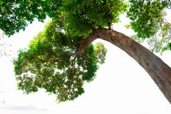Bottom view of  tree in jungle and lighting of morning.forest and environment concept. Adventurebackgroundbeautifulbigblurredbottom viewbottom forestbottom stock photos