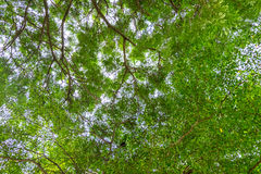 Bottom view of tree. In sunny day Royalty Free Stock Photography