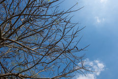 Bottom view of tree. Bottom view of tree in sunny day royalty free stock photo