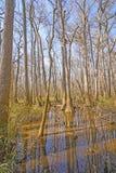Bottomland, Hartholz-Wald, Sumpfgebiet im Sun stockfoto