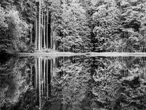 Boubin jezioro Odbicie bujny zieleni drzewa Boubin Pradawny las, Sumava góry, republika czech Zdjęcia Stock