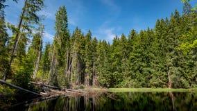 Boubin jezioro, pradawny las, Artystyczny Lasowy park narodowy obraz stock