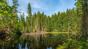 Boubin jezioro, pradawny las, Artystyczny Lasowy park narodowy zdjęcie stock