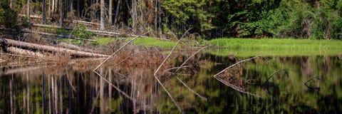 Boubin jezioro, pradawny las, Artystyczny Lasowy park narodowy obrazy royalty free