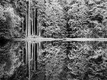Boubin sjö Reflexion av frodiga gröna träd av Boubin den urtids- skogen, Sumava berg, Tjeckien Arkivfoton