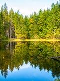 Boubin sjö Reflexion av frodiga gröna träd av Boubin den urtids- skogen, Sumava berg, Tjeckien Royaltyfria Foton