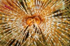 Bouche et tentacules sous-marines de ver de mer de créature Photographie stock libre de droits