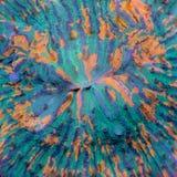 Bouche vert-bleu et orange de corail de Fungia Photographie stock libre de droits
