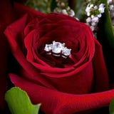Boucle de diamant dans Rose rouge Image libre de droits