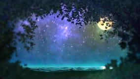 Boucle de forêt de nuit banque de vidéos