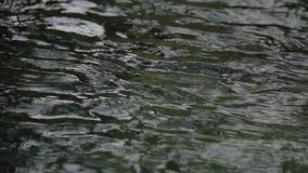 Boucle de l'eau de scintillement : L'eau de scintillement fait une boucle sans problème banque de vidéos