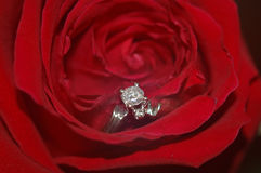 Boucle de Rose Images stock
