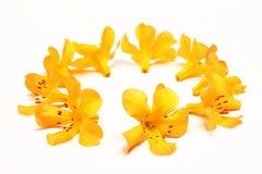 Boucle des fleurs jaunes images stock