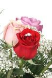 Boucle en Rose photos stock