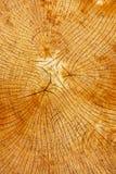 Boucles annuelles d'un arbre Photos libres de droits