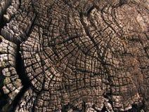 Boucles annuelles d'un vieil arbre Photographie stock