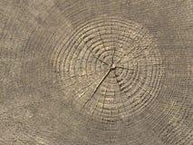 Boucles annuelles sur le tronçon d'arbre Photographie stock