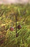 Boucles d'oreille sur le support sur l'herbe fraîche verte Photos stock
