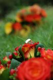 Boucles de mariage dans l'herbe Photo libre de droits