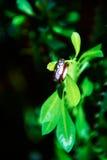 Boucles de mariage et plantes vertes Images libres de droits