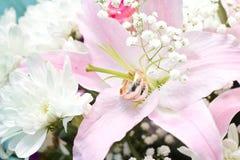 Boucles de mariage sur les fleurs Images libres de droits