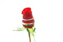 Boucles de mariage sur une rose Images stock
